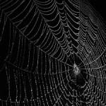 A Weaver – Lobisomem: O Apocalipse